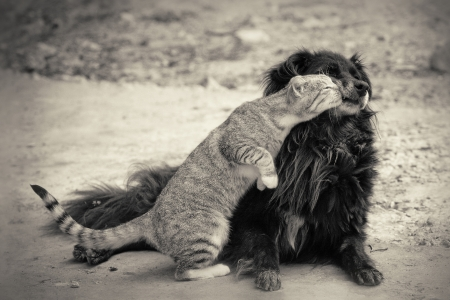 cat kissing dog.sepia