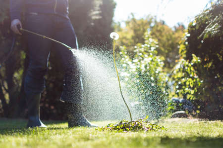 Photo pour Spraying weeds in the garden against a dandelion - image libre de droit