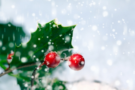 Photo pour Festive Christmas holly background with bright red berries and spiky green leaves amongst falling snowflakes with copyspace - image libre de droit