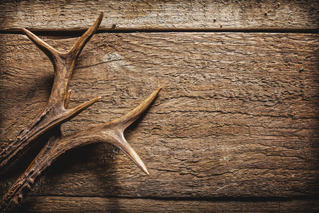 Photo pour High Angle View of Deer Antlers Against Rustic Wooden Background with Copy Space - image libre de droit