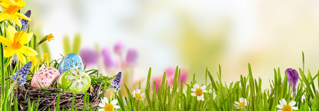 Foto de Spring banner with Easter Eggs in a bird nest nestling in fresh green grass with yellow daffodils and daisies against a blurred outdoor background with copy space - Imagen libre de derechos