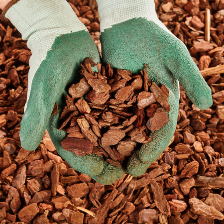 Photo pour Close up on pair of green rubber coated cloth gloved hands full of pine bark mulch wood chips - image libre de droit