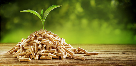 Photo pour Young seedling sprouting from a pile of wood pellets outdoors on a green background with copy space conceptual of renewable energy and fuel - image libre de droit