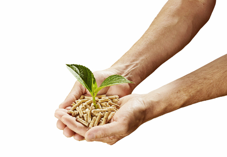 Photo pour Renewable sustainable fuel and energy concept with a man holding a heap of wood pellets with a sprouting green plant in his hands isolated on white - image libre de droit