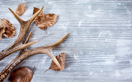 Photo for Deer antlers with dry leaves on bright wooden background - Royalty Free Image