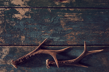 Photo pour Shed antlers for a buck or deer on vintage weathered dark grungy wood with copy space in a hunting or nature concept - image libre de droit