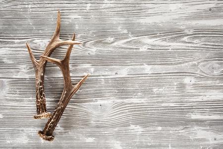 Photo pour A pair of sharp stag antlers on a rustic, empty woodgrain background. - image libre de droit