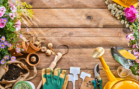 Photo pour Spring plants and garden tools frame or border over rustic wood with copy space with gloves, watering can, flowerpots, soil, trowel and seedlings for transplanting - image libre de droit