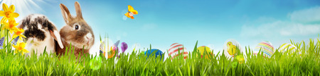 Foto de Happy Easter spring banner with two cute little bunnies, yellow daffodils and a butterfly in a spring meadow with green grass and a row of colorful Easter eggs for kids on a blue sky and copy space - Imagen libre de derechos