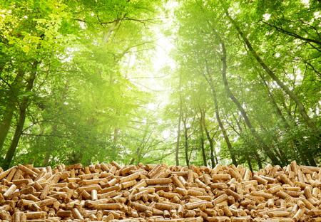 Foto de Layer of organic wood pellets in a green forest with the glow of the sun through the trees in a concept of eco-friendly renewable energy from natural resources - Imagen libre de derechos