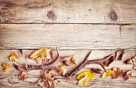 Photo for Rustic wood with fall border of colorful autumn leaves and antlers with scattered acorns below copy space - Royalty Free Image