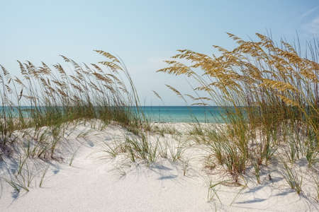 Foto de Florida Sand Dunes and Sea Oats at the Beach - Imagen libre de derechos