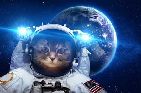 Photo for Beautiful cat in outer space.  - Royalty Free Image