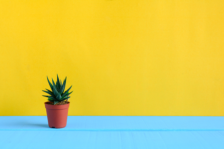 Foto de Cactus on the desk with yellow wall and minimal style - Imagen libre de derechos