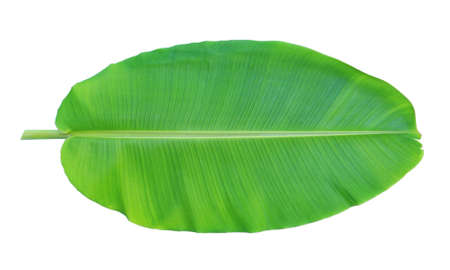 Photo pour Banana leaf isolated on white background - image libre de droit