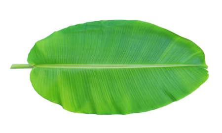 Photo for Banana leaf isolated on white background - Royalty Free Image