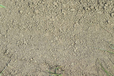 Photo for Background from the dry earth. The soil on a dirt road. - Royalty Free Image