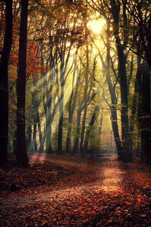 Photo for Scenery of Sprielderbos - one of the oldest and most beautiful forests in the Netherlands. - Royalty Free Image