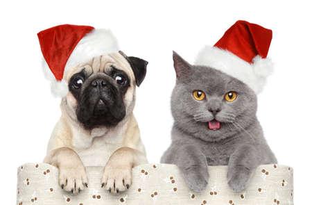 Foto de Cat and dog in red Christmas hat on a white background - Imagen libre de derechos