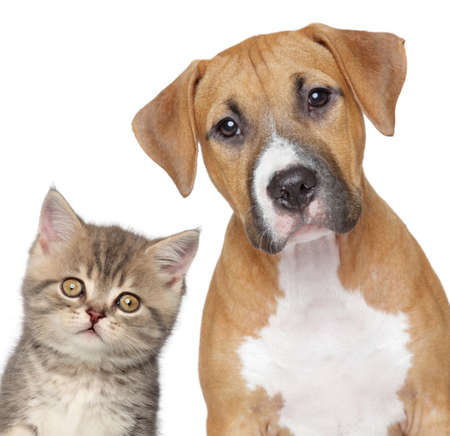 Kitten and puppy  Close up portrait on white background