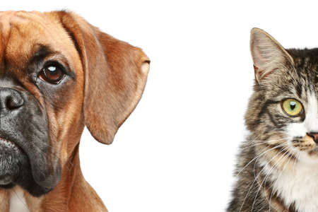 Dog and cat  half of muzzle close up portrait on a white background