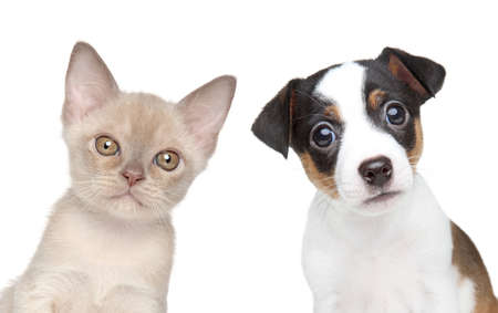 Kitten and puppy together  Close-up portrait on white backgound