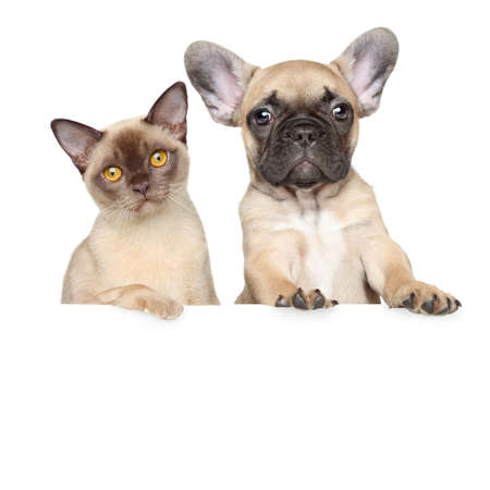 Close-up portrait of cat and dog on a white banner