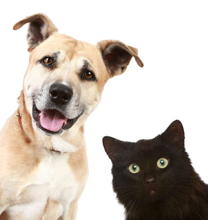 Close-up portrait of a cat and dog, isolated on white background