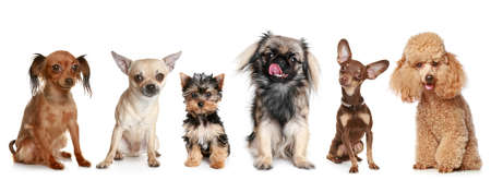 Group of young dogs, isolated on a white background
