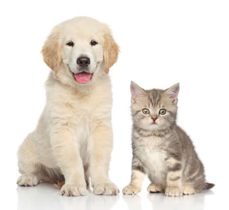 Foto de Cat and dog together in front of white background - Imagen libre de derechos