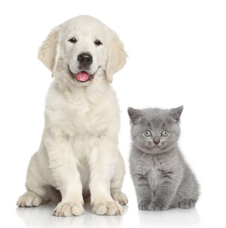 Cat and dog together in front of white background