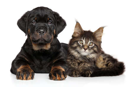 Foto de Puppy and kitten laying together - Imagen libre de derechos