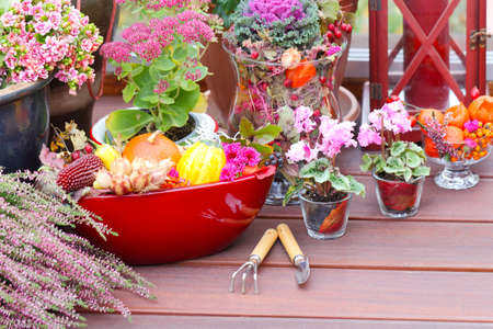 Gardening in the Fall on the terrace