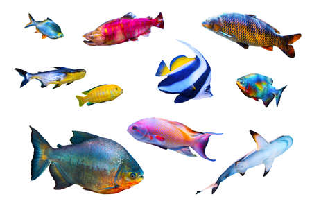 Photo for Fish collection isolated on white - Royalty Free Image