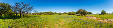 Photo pour Beautiful panoramic view of a Texas Hill Country ranch with bluebonnets and oak trees on a sunny day. - image libre de droit