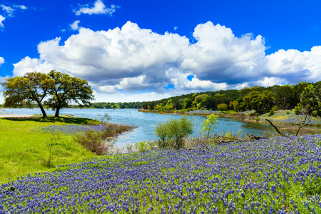 Foto de Beautiful bluebonnets along a lake in the Texas Hill Country. - Imagen libre de derechos