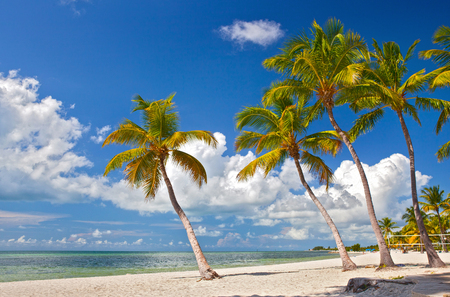 Photo for Tropical summer paradise in Miami Beach Florida with Palm trees and ocean background - Royalty Free Image