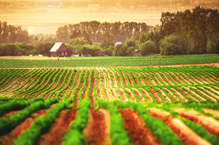 Photo pour Agricultural field with a house in the background - image libre de droit