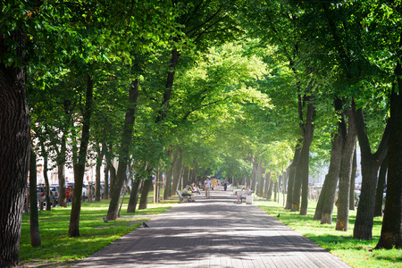 Photo for Green city park in sunny summer day - Royalty Free Image
