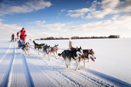Photo pour Woman musher hiding behind sleigh at sled dog race on snow in winter - image libre de droit