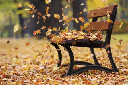 Photo for Bench in autumn park  - Royalty Free Image