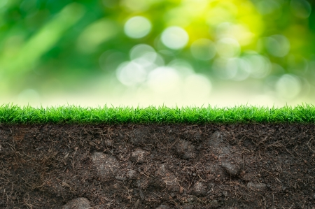 Photo pour Soil and Green Grass in Beautiful Background - image libre de droit