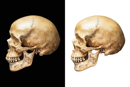 Photo pour Side of human skull isolated on black and white background with clipping path - image libre de droit