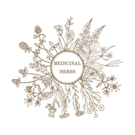 Illustration pour Vintage collection of medical herbs. Hand drawn botanical illustration - image libre de droit