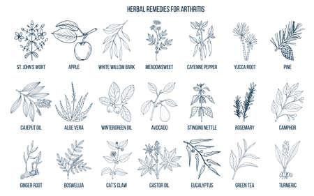 Ilustración de Best herbal remedies for arthritis. Hand drawn vector set of medicinal plants - Imagen libre de derechos