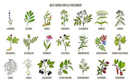 Ilustración de Best herbs for flu treatment - Imagen libre de derechos