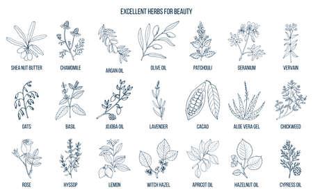 Ilustración de Best herbs for beauty. - Imagen libre de derechos