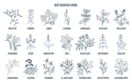 Ilustración de Collection of best sedatives herbs in outline illustraton. - Imagen libre de derechos