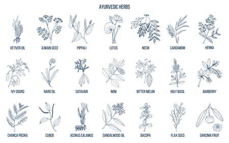 Illustration for Ayurvedic herbs, natural botanical set. Hand drawn vector illustration - Royalty Free Image