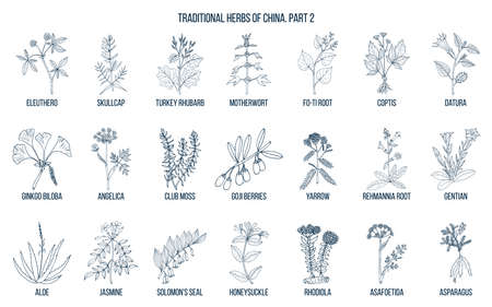 Illustration pour Chinese traditional medicinal herbs. Hand drawn vector set - image libre de droit